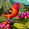 Colorful tropical bird puzzle