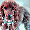 Dog in winter slide puzzle