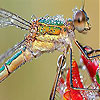 Emerald fly slide puzzle