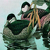 Green ducks in the lake puzzle